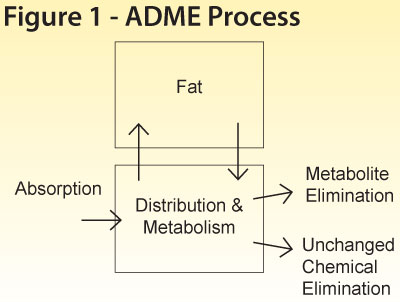 Figure 1 - ADME Process - click to enlarge